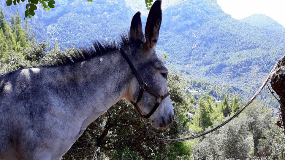 Donkey Trail - Experiencias Únicas - Essentially Mallorca