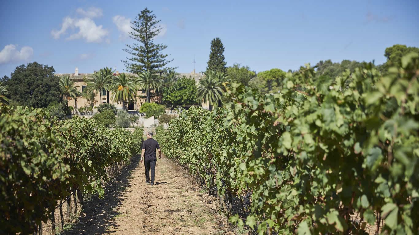 El arte del Vino - Experiencias Únicas - Essentially Mallorca